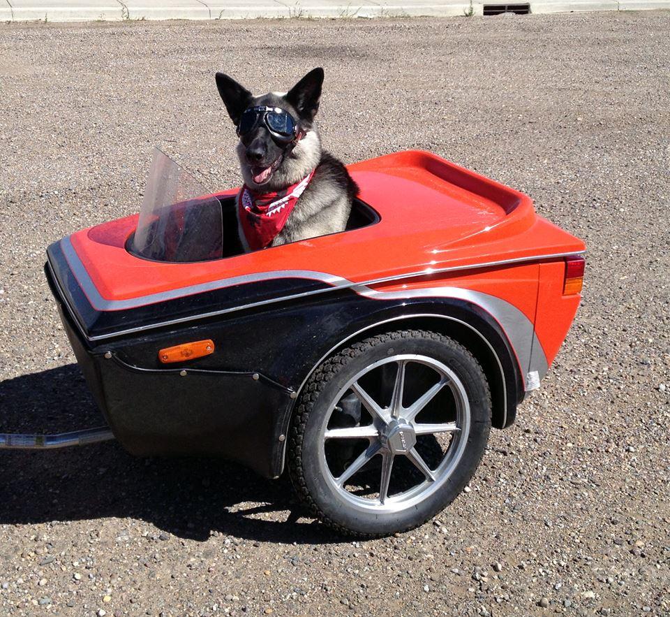 Dog companion in trailer